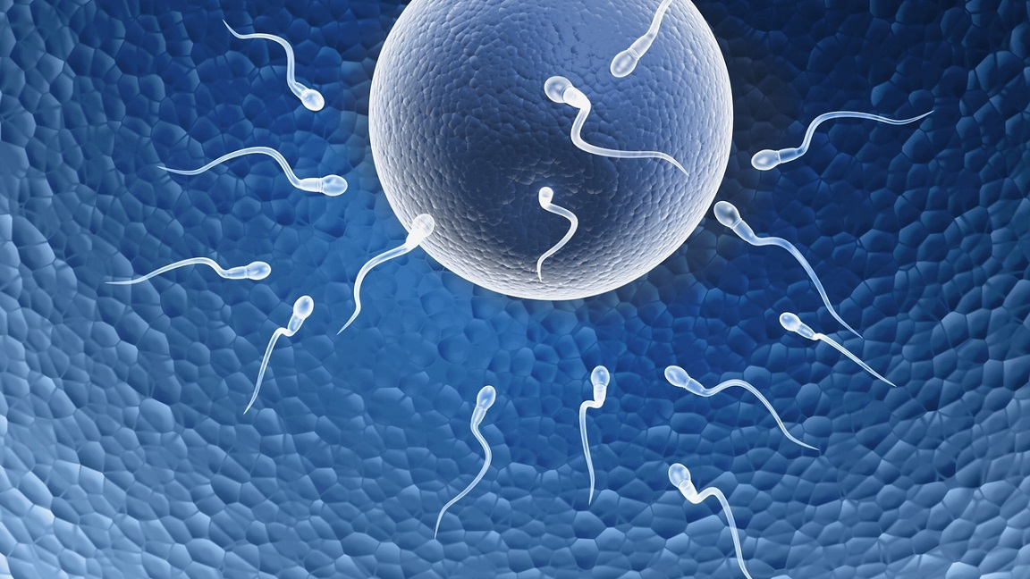 Fertility and conception tips